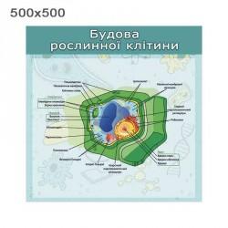 """Стенд """"Строение растительной клетки"""""""